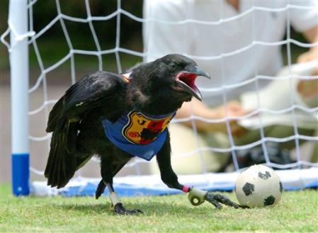 vogelball.jpg